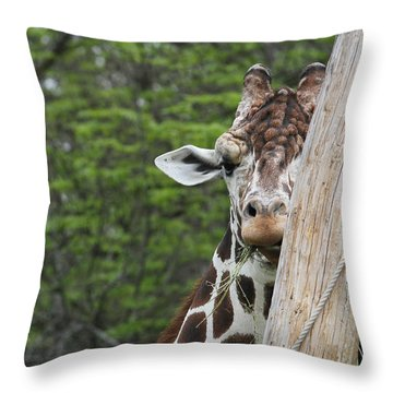 Throw Pillow featuring the photograph Hay Not Just For Horses by Judy Whitton