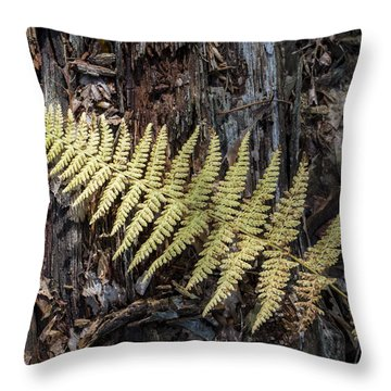 Throw Pillow featuring the photograph Hay-scented Fern by Andrew Pacheco