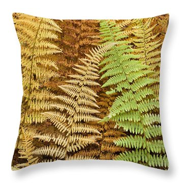 Hay-scented Ferns Throw Pillow by Alan L Graham