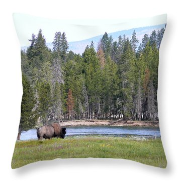 Hayden Valley Bison Throw Pillow by Laurel Powell