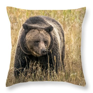 Throw Pillow featuring the photograph Hayden Valley Sow In Tall Grass by Yeates Photography