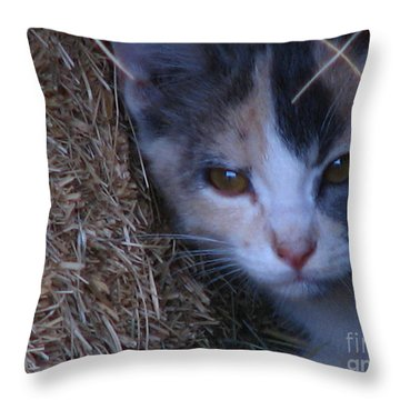 Haystack Cat Throw Pillow by Greg Patzer