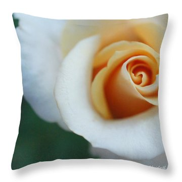 Throw Pillow featuring the photograph Hazy Rose Squared by TK Goforth