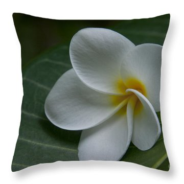 He Aloha No O Waianapanapa - White Tropical Plumeria - Maui Hawaii Throw Pillow by Sharon Mau