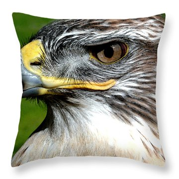 Head Portrait Of A Eagle Throw Pillow