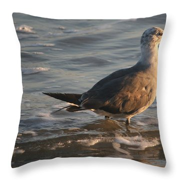 Heading Into The Late Afternoon Sun Throw Pillow by Kathleen Scanlan