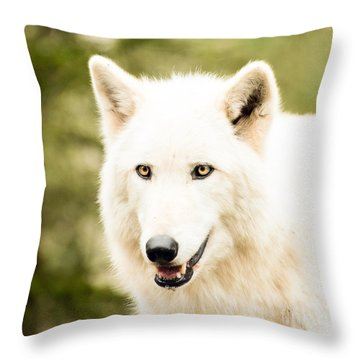 Headshot Of A White Wolf Throw Pillow by MaryJane Armstrong