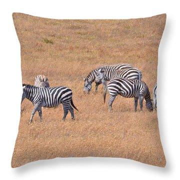 Hearst Castle Zebras Throw Pillow by Lynn Bauer
