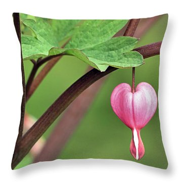 Heartdrop Throw Pillow by Janice Drew