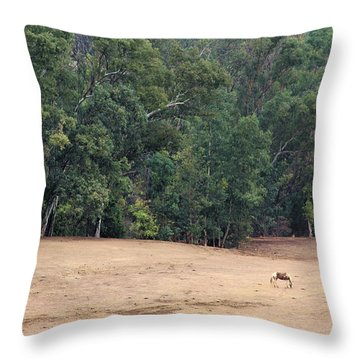 Throw Pillow featuring the photograph Heaven's Ranch In Chino Hills by Viktor Savchenko
