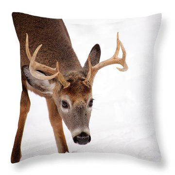 Heavy Rack Throw Pillow by Karol Livote