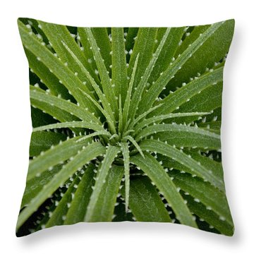 Hechtia Argentea Throw Pillow by Scott Lyons