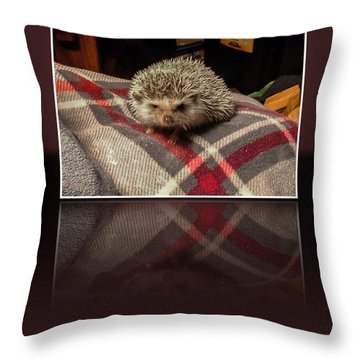 Hedgehog 5 Throw Pillow by Photographic Art by Russel Ray Photos