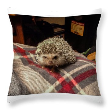 Hedgehog 7 Throw Pillow by Photographic Art by Russel Ray Photos