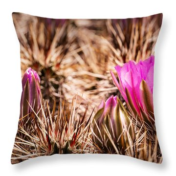 Hedgehog Cactus Flower And Buds Throw Pillow by  Onyonet  Photo Studios