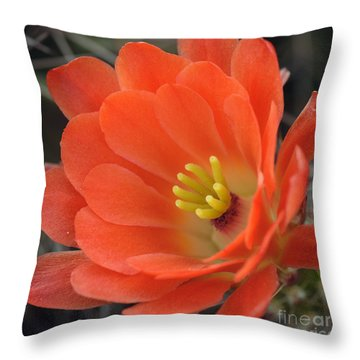 Hedgehog Cactus Flower Throw Pillow