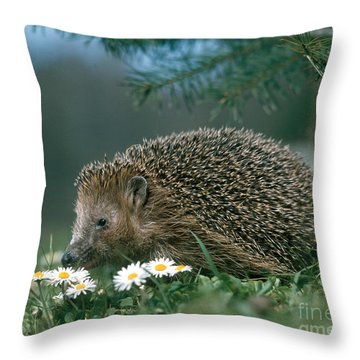 Hedgehog With Flowers Throw Pillow by Hans Reinhard