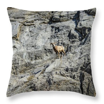 Big Horn Sheep Coming Down The Mountain  Throw Pillow