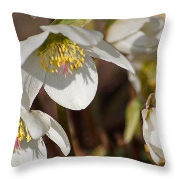 Helleborus Niger - Christrose Throw Pillow