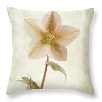 Helleborus Niger Throw Pillow by John Edwards