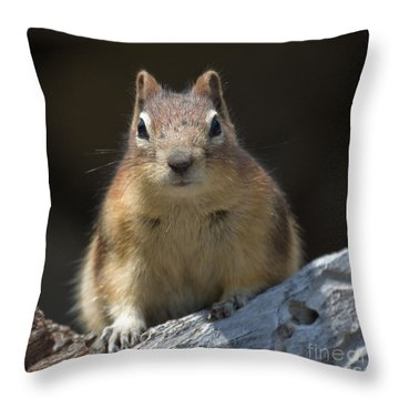Throw Pillow featuring the photograph Hello Chipmunk by Chris Scroggins