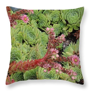 Hen And Chick In Bloom Throw Pillow
