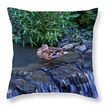 Hen Fall Throw Pillow by Skip Willits