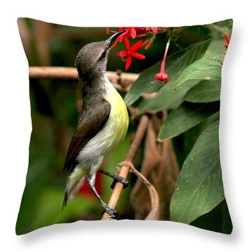 Her Highness - Purple Rumped Sunbird  Throw Pillow by Ramabhadran Thirupattur