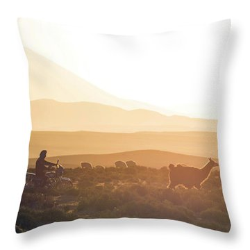 Herd Of Llamas Lama Glama In A Desert Throw Pillow by Panoramic Images