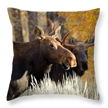 Here Comes Casanova Throw Pillow