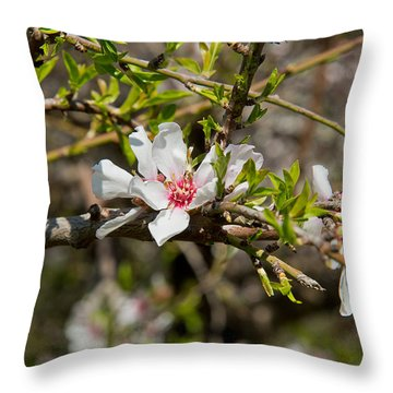 Here Comes Spring 16 Throw Pillow by Arik Baltinester