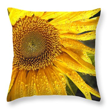 Here Comes The Sun Throw Pillow by Jean Noren