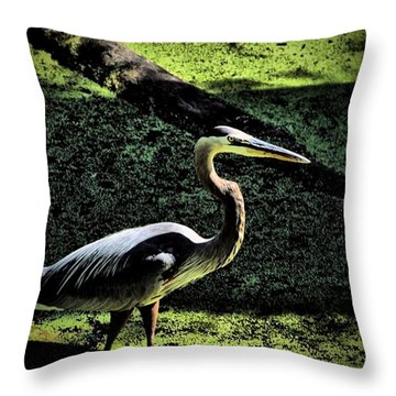 Throw Pillow featuring the photograph Here Fishy Fishy by Robert McCubbin