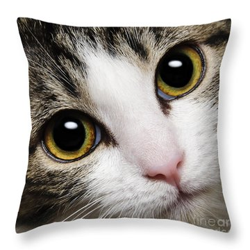 Here Kitty Kitty Close Up Throw Pillow by Andee Design