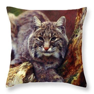 Throw Pillow featuring the digital art Here Kitty Kitty by Lianne Schneider