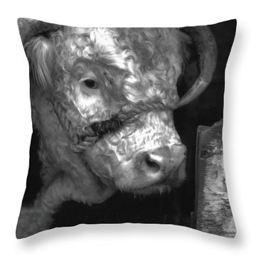 Hereford Bull In Black And White Throw Pillow