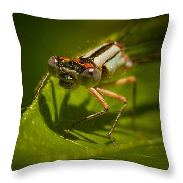 Heres Looking At You Throw Pillow by Jean Noren