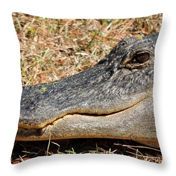 Heres Looking At You Throw Pillow by Kim Pate