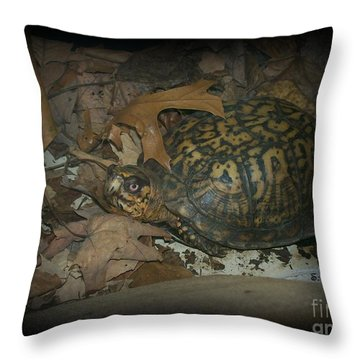Throw Pillow featuring the photograph Here's Looking At You by Sara  Raber