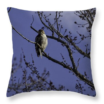 Here's Looking At You Throw Pillow by Thomas Young