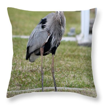 Heron On The Edge Throw Pillow by Debbie Hart