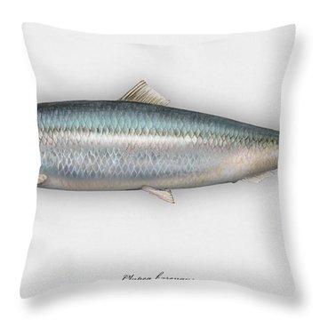 Herring  Clupea Harengus - Hareng - Arenque - Silakka - Aringa - Seafood Art Throw Pillow