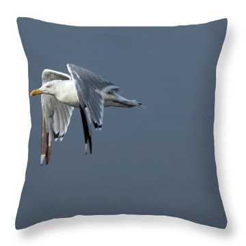 Herring Gull In Flight Throw Pillow by Karol Livote