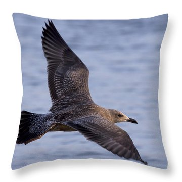 Throw Pillow featuring the photograph Herring Gull In Flight Photo by Meg Rousher