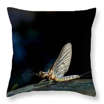 Hex 1 Throw Pillow by Thomas Young