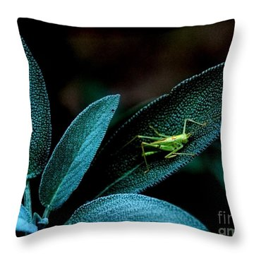 Throw Pillow featuring the photograph Hey  I'm Trying To Hide by Debra Fedchin