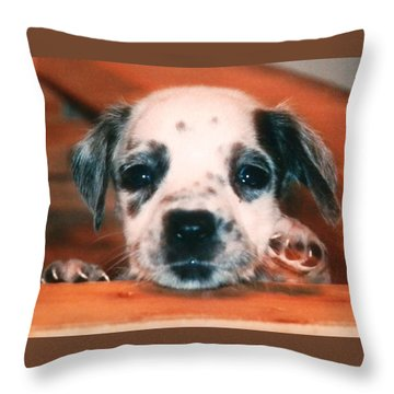 Throw Pillow featuring the photograph Dalmatian Sweetpuppy by Belinda Lee