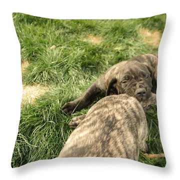 Hey You Come Back Here Buddy Throw Pillow by Jeff Swan