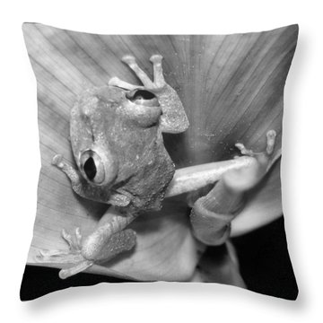 Hi From Frog In A Tai Throw Pillow
