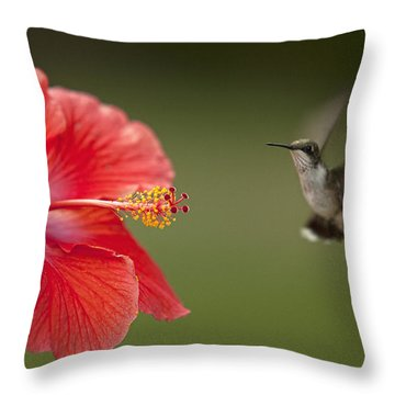 Hibiscus Hummingbird Throw Pillow by John Crothers